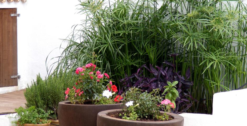 Show can jordi ibiza villa flowers 0042