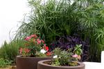 Thumb can jordi ibiza villa flowers 0042